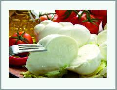 Оборудование для - производства сыров группы «паста – филата»